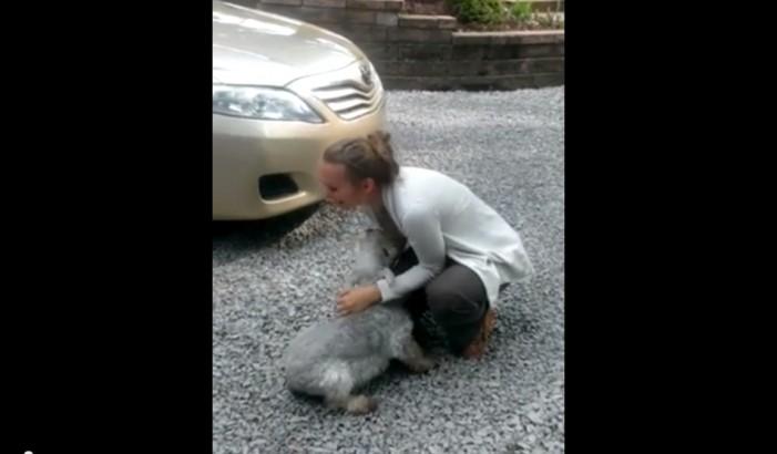 Un căţel a leşinat de bucurie când şi-a revăzut stăpâna (video)