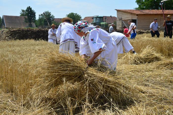 """""""Festivalul secerișului"""" la Moftinu Mare (galerie foto)"""