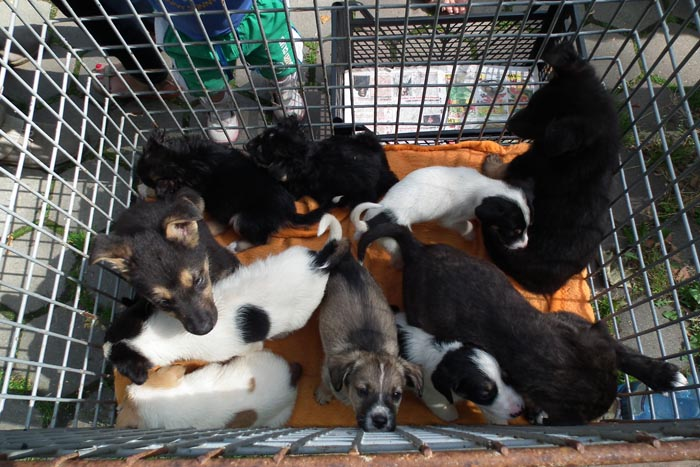 Cinci căţeluşi au fost adoptaţi azi, la târgul din Grădina Romei