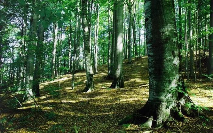 Bărbat rătăcit în pădure, găsit de jandarmi