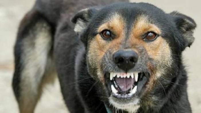 Femeie desfigurată de un câine. Victima, în stare critică