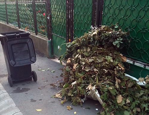 Acțiune de colectare a deșeurilor vegetale în municipiul Satu Mare