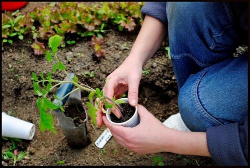 """Asocația """"Stea"""" caută grădinari voluntari"""