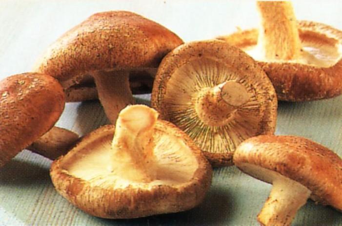 Numărul persoanelor intoxicate cu ciuperci a ajuns la 28
