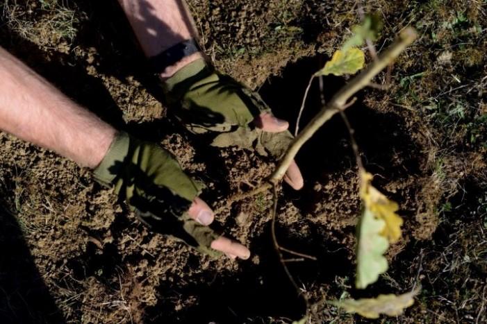 Campania de plantare de puieți, continuă și în acest an