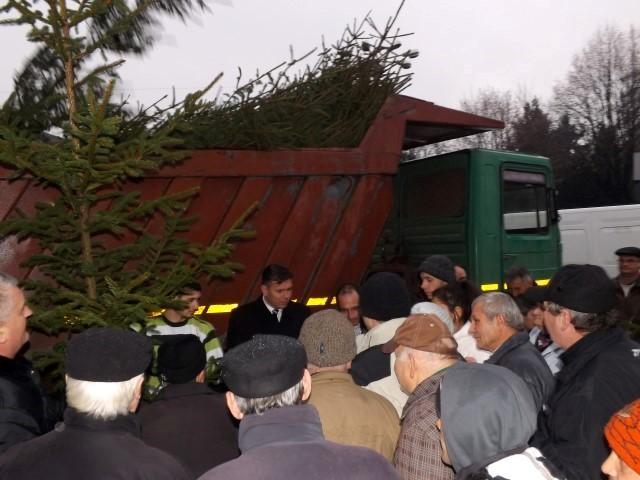 PLR Satu Mare a împărțit brazi de Crăciun