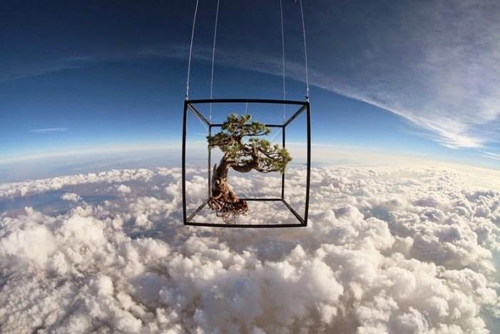 Un artist japonez lansează flori în spațiu