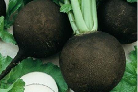 Ridichea neagră, un izvor de sănătate