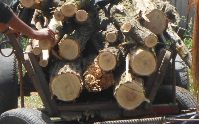 Au furat lemne din pădure