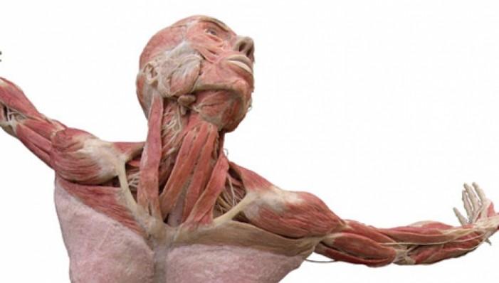 Corpuri umane disecate, expuse într-un muzeu din Berlin