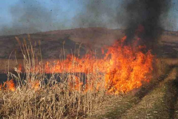 Focul a mistuit un hectar de vegetație uscată