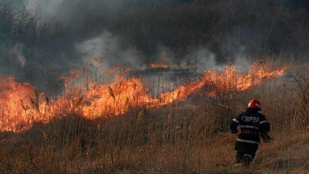 Au ars 100 de hectare de vegetație uscată în Certeze