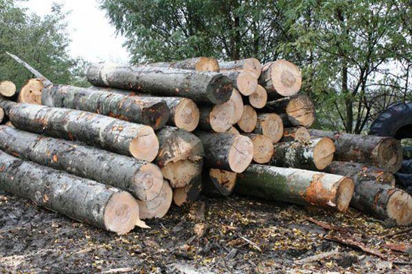 Vezi cât s-a furat din pădurile județului în ultimii doi ani