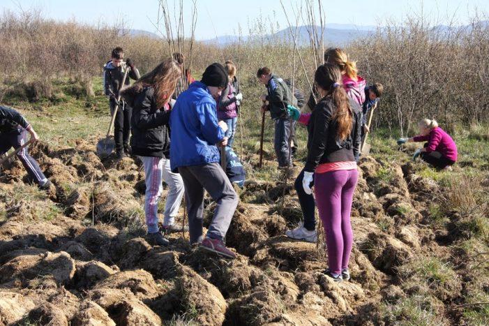 SCA Satu Mare a plantat peste 6.000 de puieți în Iojib și Turulung
