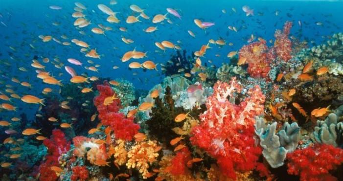 Vizitați insule exotice şi locaţii subacvatice cu Google Street View