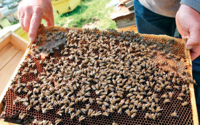 La un pas să moară, din cauza albinelor