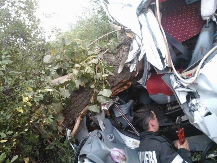 Un copac s-a prăbuşit peste o maşină. Şoferul a scăpat cu leziuni uşoare (Foto)