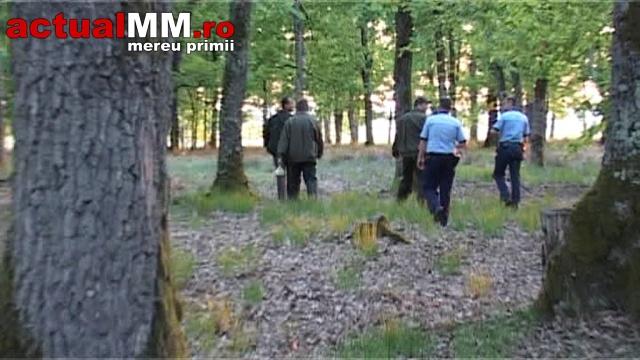 Tânăr din Satu Mare, prins la furat de lemne în Maramureș (Foto)