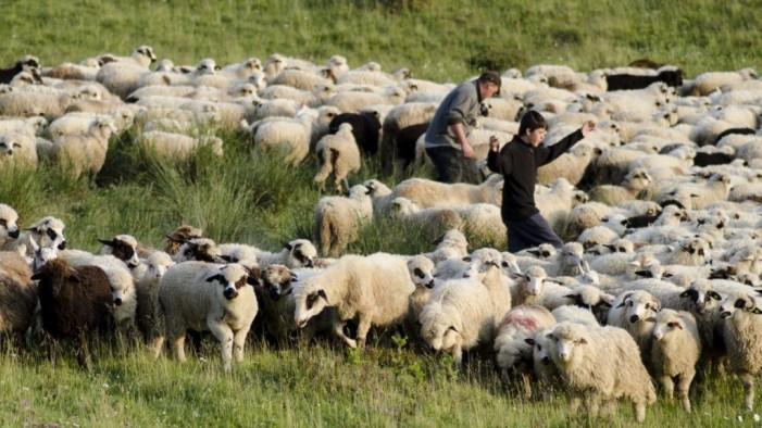 Cioban bătut la Dindești