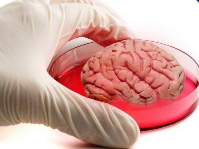 Primul creier uman aproape complet format, obținut în laborator