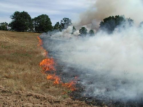 Vezi ce riscă fermierii care ard resturile vegetale pe terenul arabil