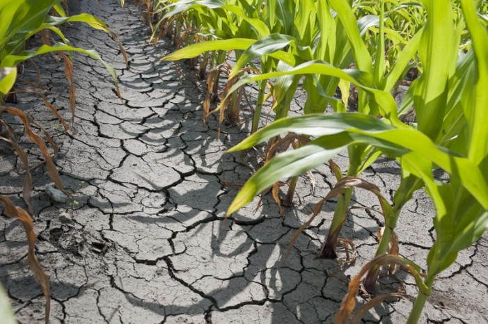25 septembrie – data limită pentru evaluarea pagubelor produse de secetă
