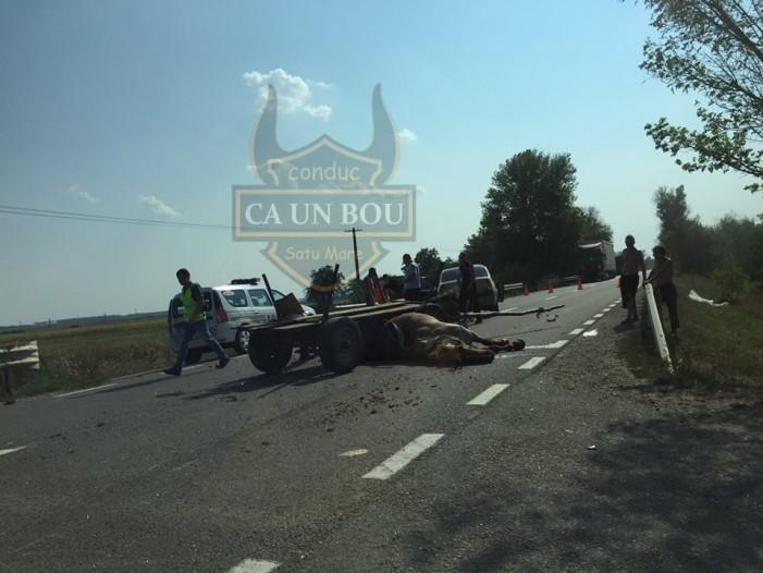 Vezi cine se face vinovat de producerea accidentului din localitatea Doba