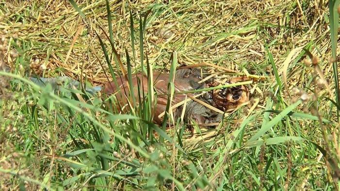 Cadavrul unui bărbat descoperit într-un șanț (Foto)