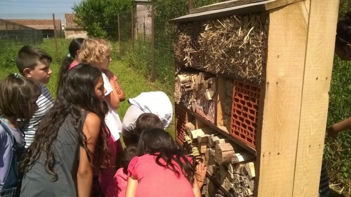 Hoteluri pentru insecte la Turulung