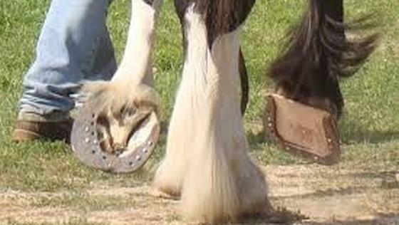 A ajuns la spital cu fața zdrobită de copita unui cal