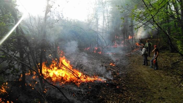 Simulare incendiu: Pompierii în acțiune, în Pădurea Noroieni