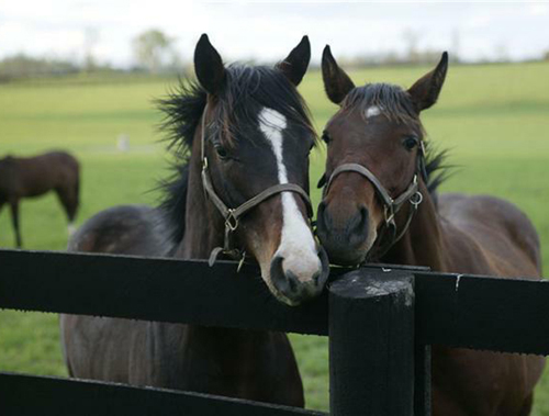 Hoți de cai din Stâna, prinși de polițiști