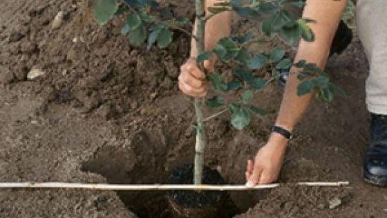 Plantare de arbori la Școala Gimnazială din Oar