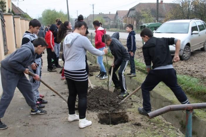 Elevii din Oar au plantat puieți de tei în vecinătatea școlii din localitate (Foto)