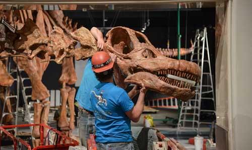 Vezi scheletul celui mai mare dinozaur care a existat vreodată (Foto&Video)