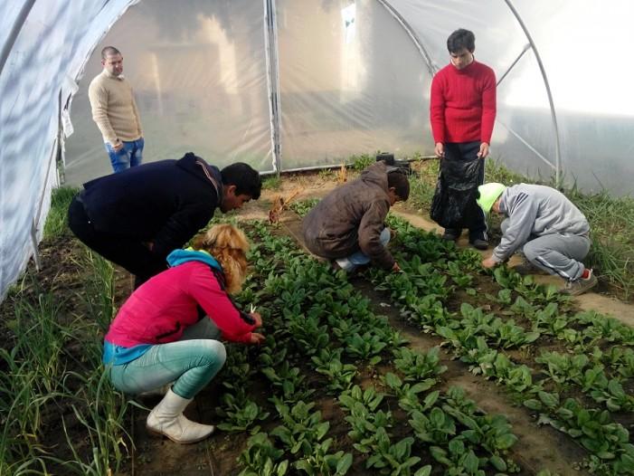 """Proiectul """"Grădina Stea"""", finanțat prin programul """"Idei din Țara lui Andrei"""""""