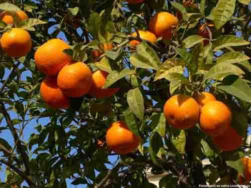 Află tot ce nu știai despre portocale