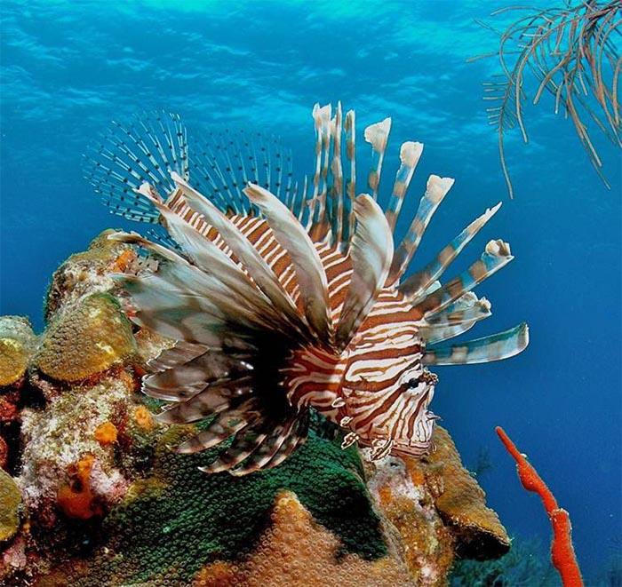 Paradisul subacvatic în zece imagini încântătoare (Galerie foto)