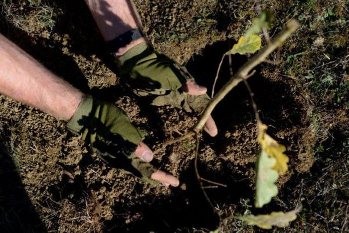 Plantare de puieți în județul Satu Mare