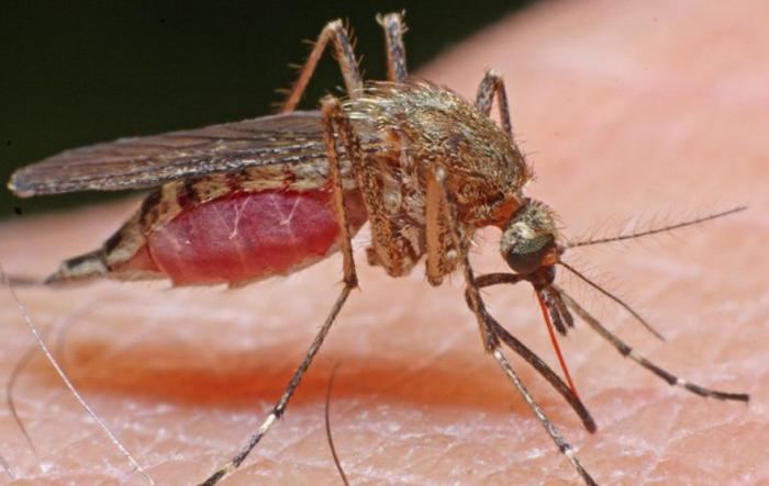 Cinci sătmăreni au ajuns la spital cu înțepături de insecte