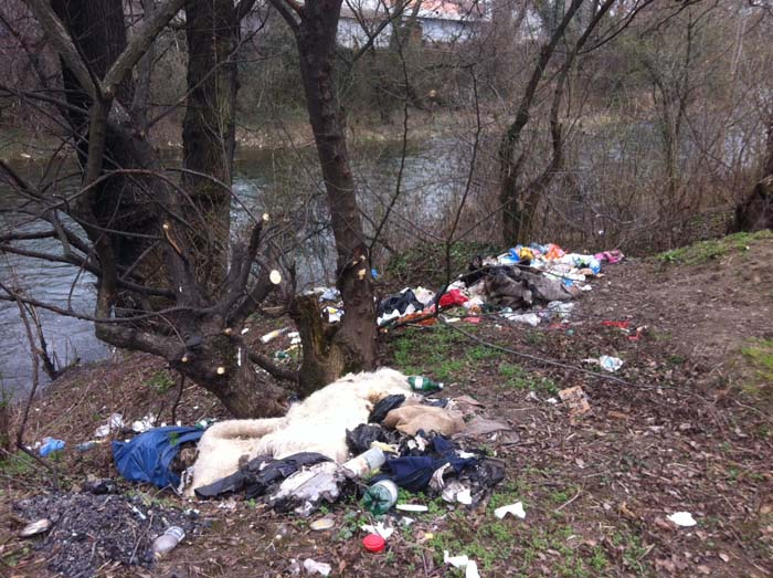 Deținuții au curățat malurile râului Someș