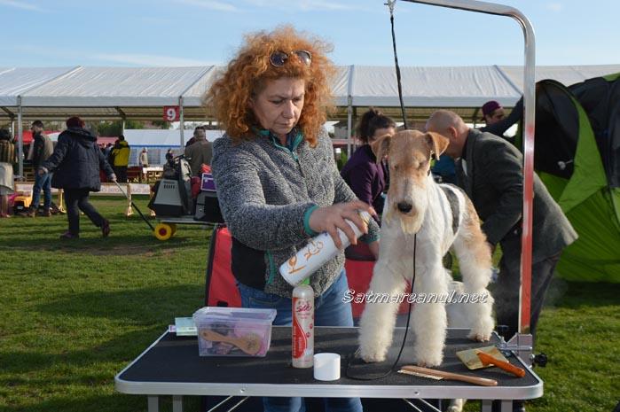 """A început """"International Dog Show"""" Satu Mare (Galerie foto)"""