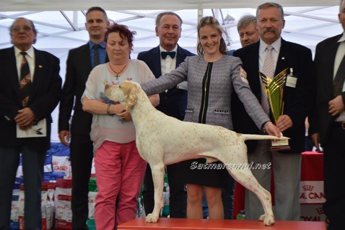 """Un câine din SUA, câștigătorul """"Suprem Best in Show-ului"""" de la Satu Mare (Galerie&video)"""