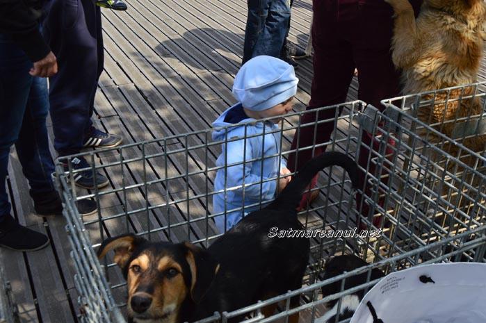 Un nou târg de adopții de câini în municipiul Satu Mare (Foto)