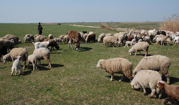 Cioban amendat de jandarmi