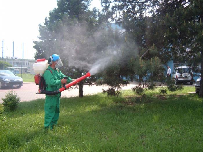 Programul deratizării și dezinsecției în municipiul Satu Mare