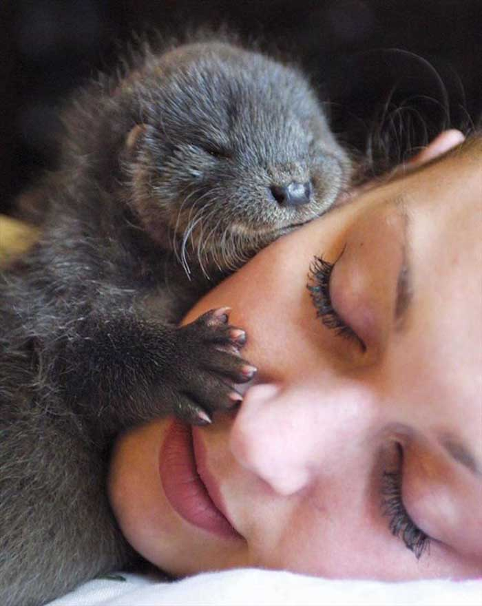 Fotografii haioase cu animale adormite (Galerie foto)