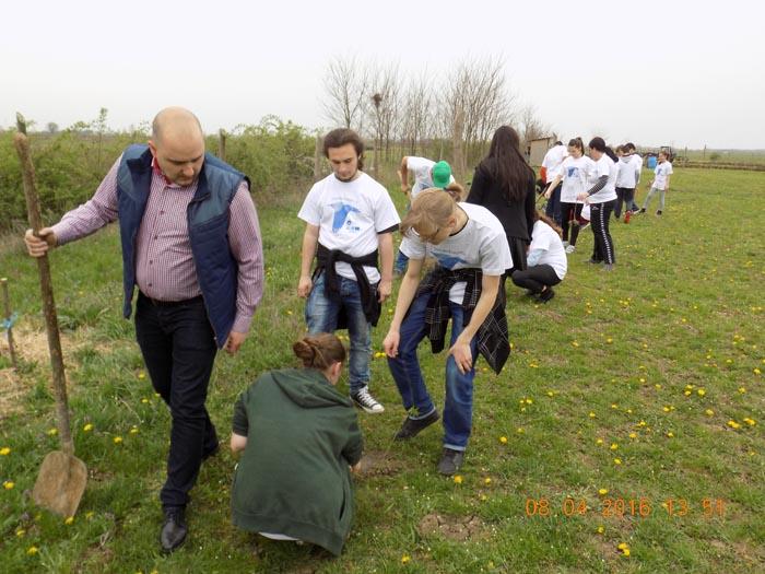 S-a încheiat campania de plantat puieți (Foto)