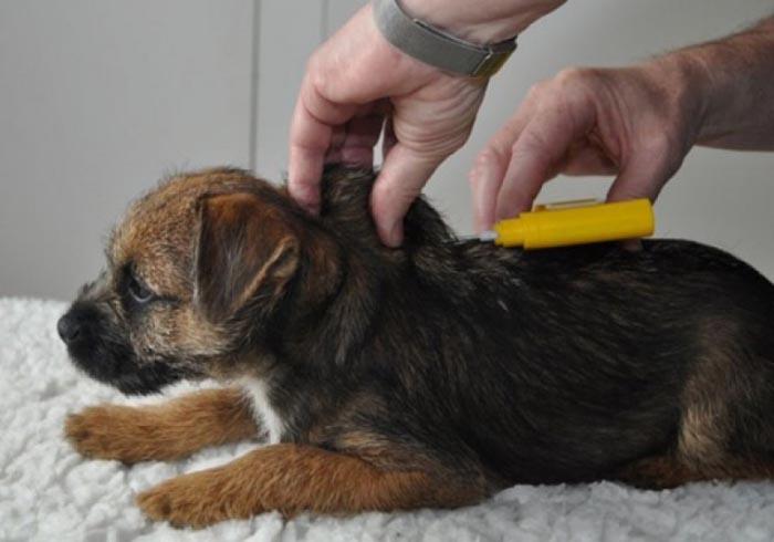Medic veterinar, amendat de DSV