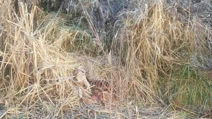 Animale moarte, aruncate pe câmp